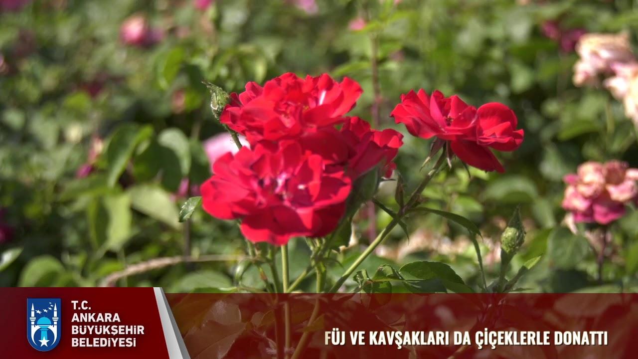 Eskişehir Yolu Çiçek Açtı