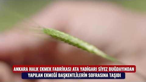 """TÜRKİYE'NİN """"ENSİYEZ EKMEĞİ"""" HALK EKMEK'TEN"""